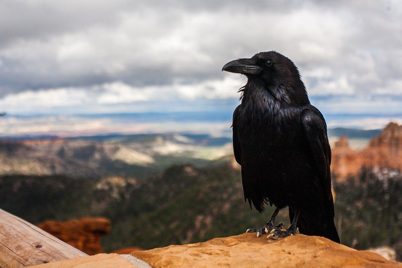 Ravencoin Kurs Prognose